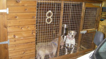 Before being rehomed - stuck in cages in a warehouse in Commerical Road, March