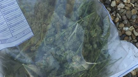An amount of the dried bud recovered during the raid in Haddenham