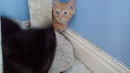 The mum and two young kittens were found in Mereway off Milton Road, Impington