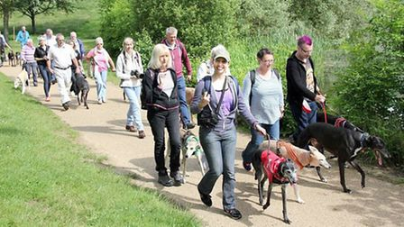 Participants of The Great Global Greyhound Walk at Ferry Meadows in 2016.