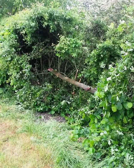 A hedge outside David Jermy's home, which was left heavily damaged after a car came off the road and