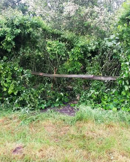 The damage done to Mr. Jermy's hedge after a car came off the Branch Bank road.