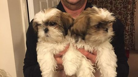 £1,000 reward to find dogs stolen from Coates
