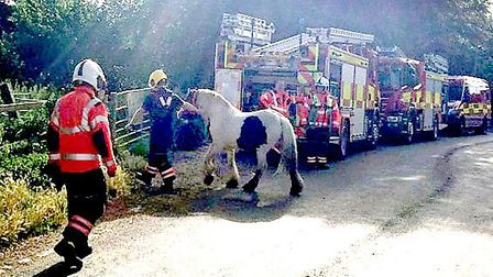 Distressed horse rescued from river in Bury Lane, Sutton Gault