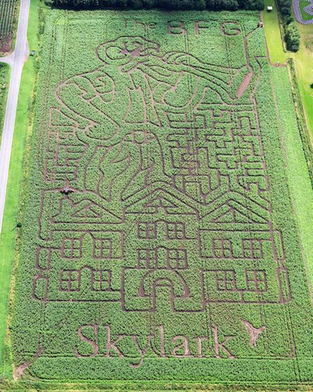 ROALD DAHL FAN CREATES WORLDS BIGGEST BFG MAZEPictures show a 12 acre Maize Maze in thedesign of t