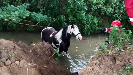 A pony was rescued by the RSPCA after falling into a river in Fenstanton.
