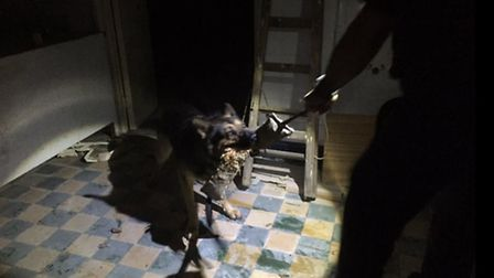 Beds, Cambs and Herts police dogs help with a suspicious incident in Wisbech St Mary