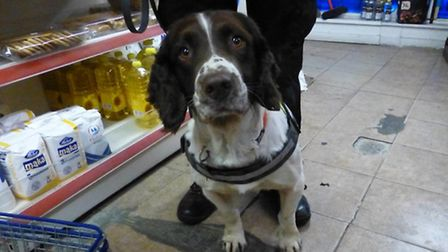 Specially trained dogs were used at a Wisbech convenience store to uncover illegal tobacco