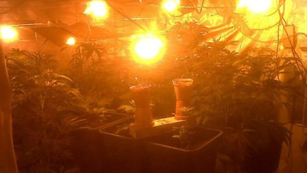 The cannabis that was recovered from a house in Burwell