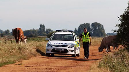 Police were called after a resident feared badgers were being batied at Mepal - but it is licensed w
