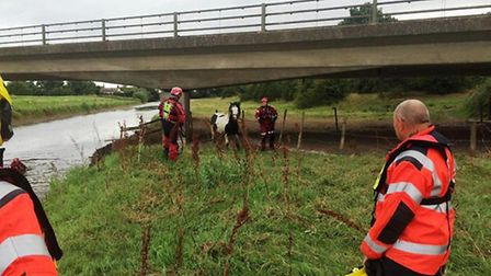 Horse is rescued at Mepal