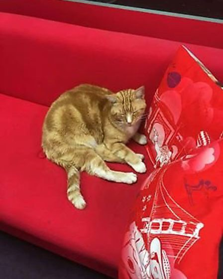"""Garfield the cat has been banned from the instore Virgin desk following """"an incident."""""""