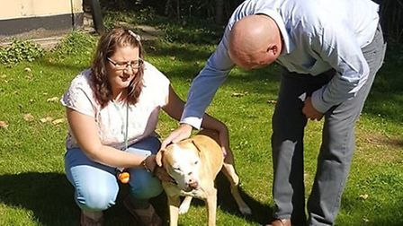 A bait dog being cared for by Ravenswood Pet Rescue is taking slow steps towards a long road to reco
