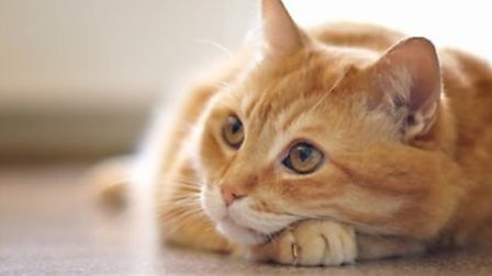 Reassurance for owners of cats killed on the road in the Fens