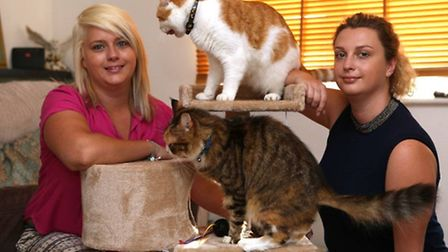 Gemma and Lauren with their cats as they prepare to open a Cat Cafe.