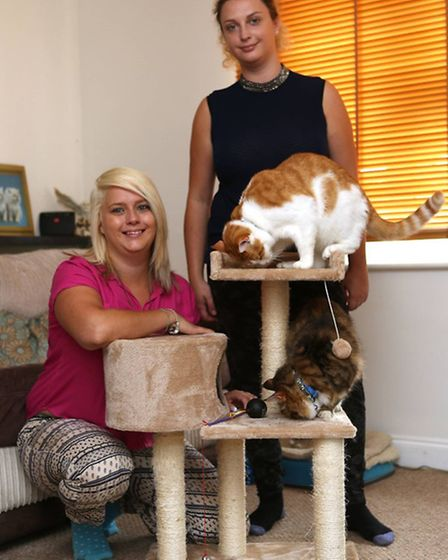 Gemma and Lauren with their cats as they prepare to open a Cat Cafe
