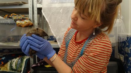 Suzanne Lyons with one of her rescue hedgehogs