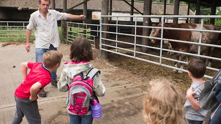 Ouse Washes Nature Friendly Zone. Pictured: Family Farm Walk, cows