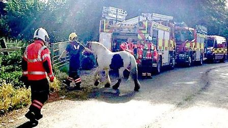 Distressed horse rescued from river in Bury Lane, Sutton Gault.
