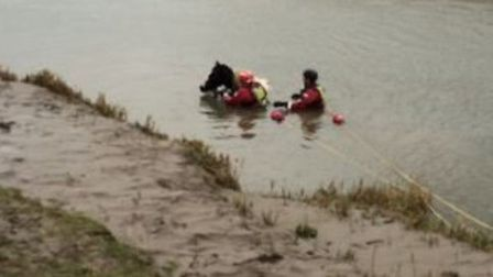Horse is rescued by fire crews after getting stuck in a river at Guyhirn