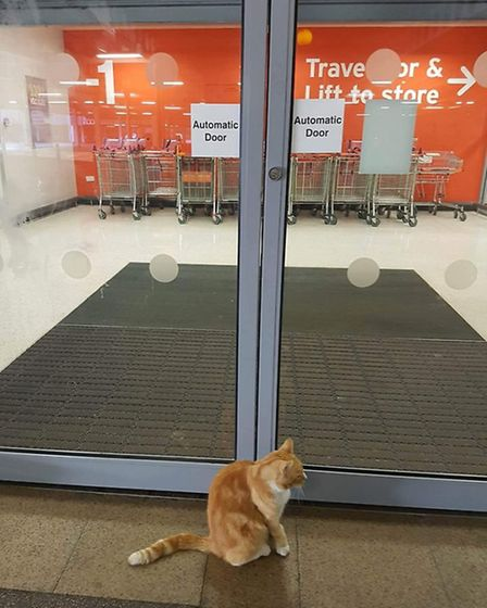 Mr Garfield patiently waiting for Sainsbury's to open