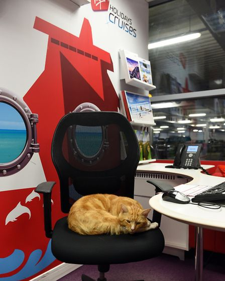 Garfield the cat who has now been allowed back into Virgin holidays in Ely