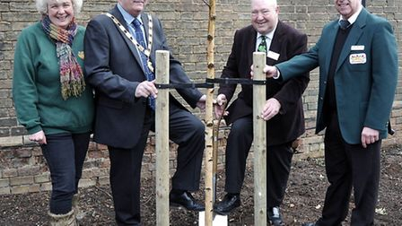 Flashback to: Launch of Chatteris in Bloom and Anglia In Bloom for the 2013 Campaign. A Silver Birch