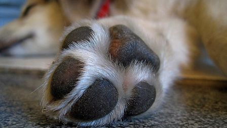 Wash your dogs paws after walks in snow or sleet as de ice and gritting salt and can be fatal if ing