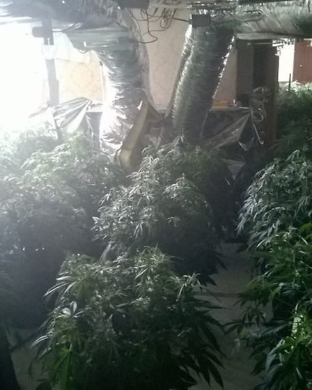 The cannabis factory discovered in Norwood Road, March