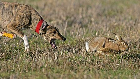 27 dispersal orders issued in crackdown on hare coursing in the north Cambs and Lincolnshire.