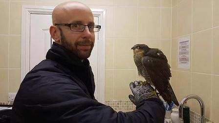 FAR animal rescue technician, Russ Huber, with a sparrowhawk that was found downed in a Chatteris ga
