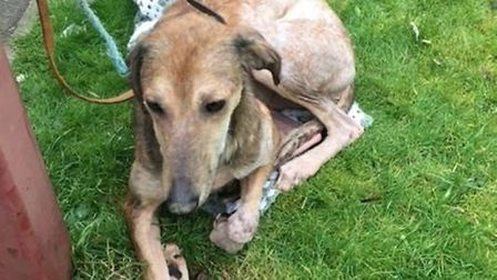 An animal rescue charity is appealing for information after a dog was abandoned and left tied to a f