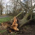 A tree which was blown down in Long Drove, Friday Bridge on yesterday Thursday brought down a power