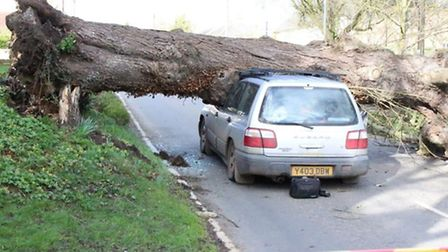 """A tree surgeon who managed to """"lean back just in time"""" before a tree came crashing onto his car in W"""