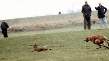 A dog pressing a hare