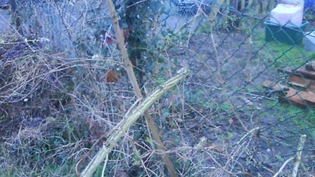 This is Carol Bartlett's garden bush after it was uprooted by contractors