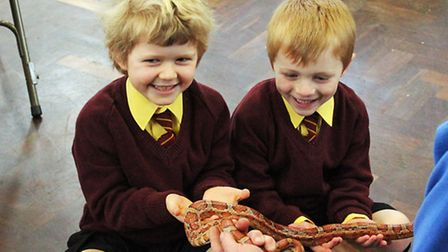 Felsted School Reptile Show