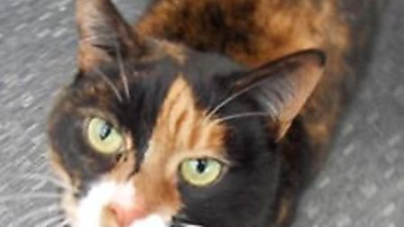 'Friendly and affectionate' Cleo came into the branch's care when her elderly owners were unable to