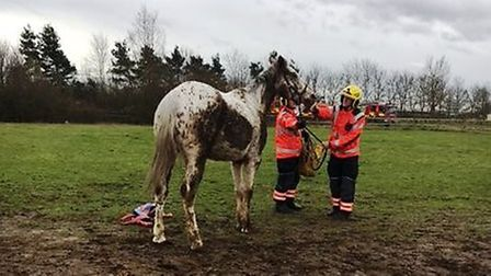 Cambridgeshire Fire and Rescue crew rescue a horse whose hoof was trapped in a gate