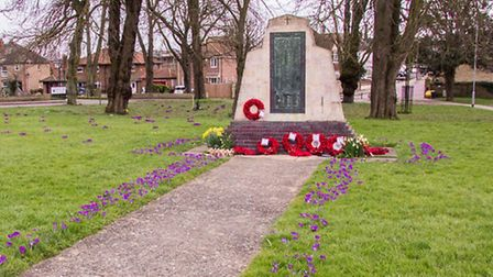 The crocuses were planted as part of Rotary's campaign to rid the world of Polio. PHOTO: Tony Winche