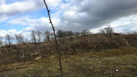 Anglian Resources Ltd claim they have been treated unfairly by authorities. Waste wood piled up on M
