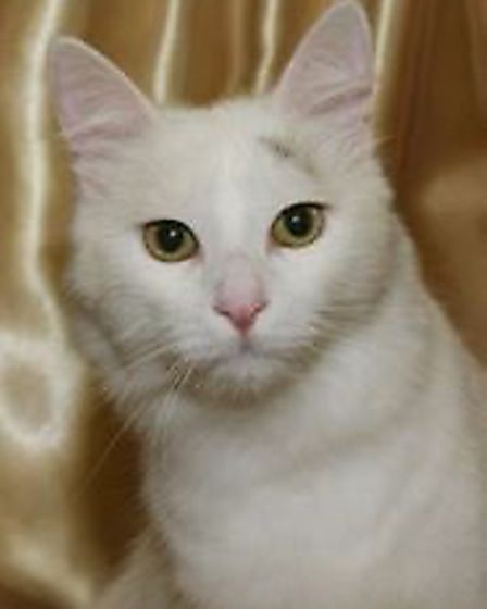 """Ely and District Cats Protection raised £1,300 at its """"most successful"""" cat show and homing day so f"""