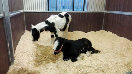 The RSPCA is appealing for information to find the people responsible for dumping two poorly foals i