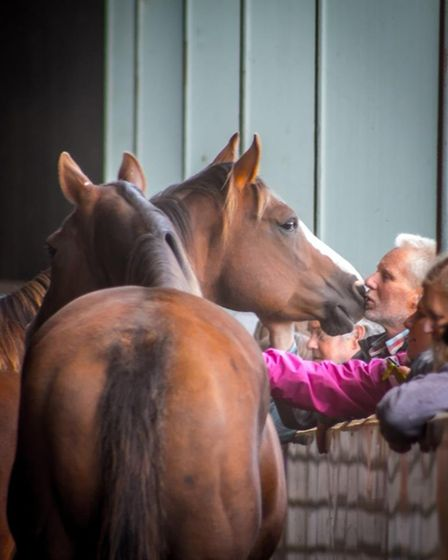 Sovereign Quarter Horses in March is holding a free open day on Sunday April 9.