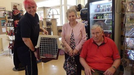 Thomas the cat finds a new home during the RSPCA's have a heart Valentine's weekend PHOTO: RSPCA