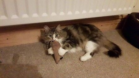Fairy the cat found a new home during the RSPCA's have a heart Valentine's weekend PHOTO: RSPCA