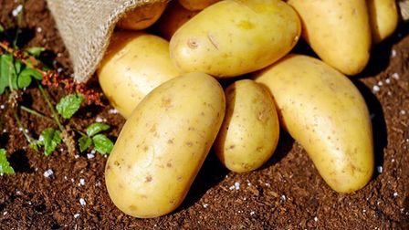 National potato think tank is joined by three regional specialists PHOTO: Pixabay