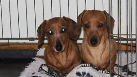 Lola (pictured on the right) a miniature dachshund has been stolen from a home in Upwell with three