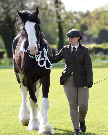 Upwell Horse and Pony Show. Katie Butters with Chorleys Marvelous. PHOTO: Ian Carter.