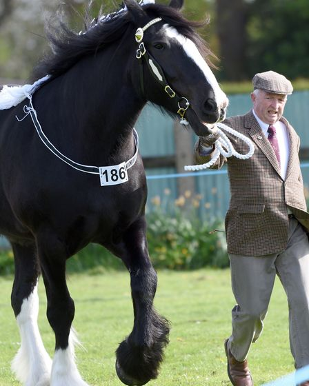 Upwell Horse and Pony Show. David Sherwood with Billy. PHOTO: Ian Carter.